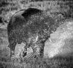 -- Chobe National Park, Botswana