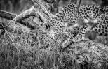 -- Okavango Delta, Botswana